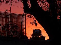Garbage Truck at Dawn (starmist1) Tags: garbagetruck wastemanagement dawn fence tree color hff powerlines chainlink brakelights paradisetree branches morning orange firstlight silhouette
