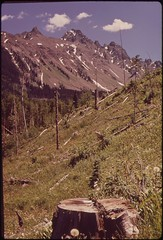 Logging scars, 05/1972. (The U.S. National Archives) Tags: trees mountain snow landscape photography colorado unitedstates logging nationalforest stump uncompahgre environmentalprotectionagency documerica usnationalarchives boydnorton nara:arcid=544852