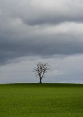 Lone Tree in Field of Green with Storm Approaching - Tayside Scotland (Magdalen Green Photography) Tags: scotland moody scottish tayside stormclouds ruralscene scottishlandscape 3322 stormapproaching iaingordon magdalengreenphotography lonetreeinfieldofgreen