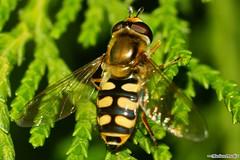 Robal - Bug (Mariusz Pracki) Tags: macro bug makro helios robaki