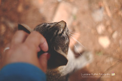 [photo 39] Caress (Luciane Huffel) Tags: me animal cat self hand gato mo fumaa luciane 2013 project100 100picturesofmycats