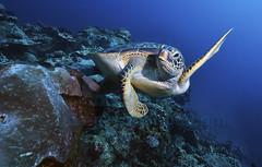2012 10 METTRA OCEAN INDIEN 2354