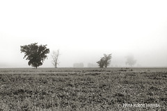 En plein brouillard... / In the fog... (Pentax_clic (moins prsent/ less active)) Tags: bw mist tree field fog noiretblanc quebec arbre brouillard champ brume vaudreuil robertwarren
