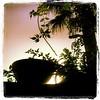 #sud #sunrise #italia #italie #sicile #sicily #instagram #instasicily #instaitalia #tree #green #arbre #verdure #south #matin #morning #sun #light #soleil #luce #sole #instacool #pixoftheday #picoftheday (angi1101) Tags: square squareformat lordkelvin iphoneography instagramapp uploaded:by=instagram