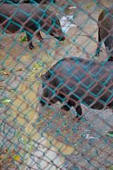 _81 (Taiwan's Riccardo) Tags: color digital nikon zoom taiwan dslr d600 nikonlens  f4556 ixnikkor 60180mm