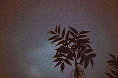 Soir d'orage (Helodie) Tags: sunset summer leave silhouette night lot soir acacia orage feuille robinier