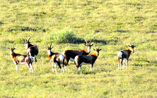 South Africa Hunting Safari - Eastern Cape 28