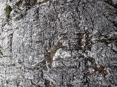 IMG_0326.jpg (KevinAirs) Tags: mist countryside moss australia textures boulders tasmania stony lichen rugged cradlemountain worldheritagearea tectures kevinairs442 ©kevinairswwwwordsandpixcom clairelakescradlemountainnationalpark