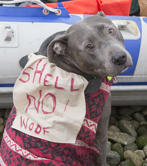Dogs Against Arctic Drilling (Greenpeace USA) Tags: ocean seattle coastguard usa washington kayak protest shell rig oil pioneer activists