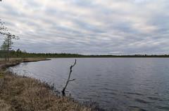 Iso Niittylampi (Juho Holmi) Tags: finnland finlandia pentax k5 k 5 sigma af 1770mm f2845 dc macro 17 70 28 45 thisisfinland visitfinland