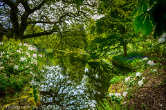 Reflection Lake (Kevin From Manchester) Tags: england kevin estate walker nationaltrust hdr lymepark 2015