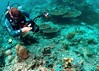 Diver and turtle (gillybooze) Tags: madaleunderwaterimages ©allrightsreserved sipadan malaysia diver scuba turtle coral reef camera fish underwater sea strobe buddy