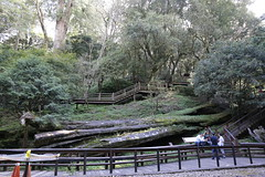 161017_1464 (Gordon C 歌頓) Tags: taiwan 臺灣 chiayi 嘉義 alishan 阿里山 sacredtree 神木