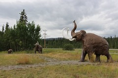 Woolly Mammoths (demeeschter) Tags: canada yukon territory whitehorse beringia interpretive centre museum heritage archaeology palaeonthology history attraction science