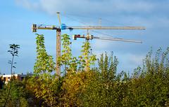 Autum 2016 - 56 (Hejma (+/- 5400 faves and 1,7 milion views)) Tags: thebeginningofautumn constructioncranes cloud trees polish flora grass yellow green chiaroscuro