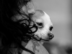 Puppy Love. (Omygodtom) Tags: dog puppy abstract animalplanet love nature people perspective tamron90mm tamron bright wow