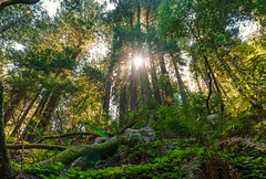 """Muir Woods • <a style=""""font-size:0.8em;"""" href=""""http://www.flickr.com/photos/54083256@N04/29926928071/"""" target=""""_blank"""">View on Flickr</a>"""