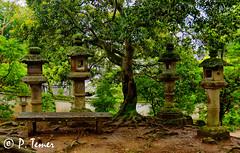 A Peaceful Thinking Spot (Sol y Luz Photography (aka love_2_see_the_world)) Tags: japan nara lanterns treeroots bench