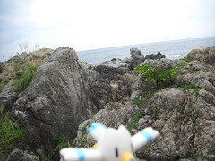Wingull in Muroto, Kochi 1 (Cape Muroto)
