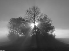 Brume d'automne dans les champs d'Alaise (francky25) Tags: brume dautomne dans les champs dalaise noir et blanc franchecomté doubs