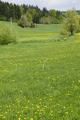_DSC6427 (Nonesmanneslond) Tags: slovenia slovene kitnivhr