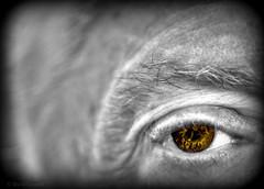 Macro Mondays - Someone's Watching (zendt66) Tags: zendt66 zendt nikon nikkor d7200 60mm macromondays spooky frightful eye selectivecolor macro