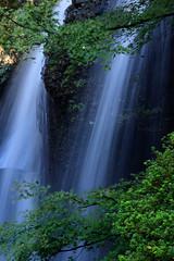 Waterfall (t.kunikuni) Tags: jp 茨城県 茨城 いばらき イバラキ 久慈郡 久慈 くじ クジ 大子町 大子 だいご ダイゴ 月待の滝 つきまちのたき ツキマチノタキ 滝 紅葉 もみじ モミジ japan ibarakiken ibaraki kujigun kuji daigomachi daigo tsukimachifalls tsukimachinotaki falls maple waterfall