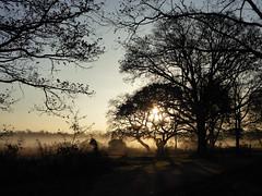 Silhouette (Gilder Kate) Tags: wimbledoncommon wimbledon london sw19 morningmist intothesun november mist sun panasoniclumixdmctz70 panasoniclumix panasonic lumix dmctz70 tz70 silhouette