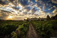 Carcassonne -040 (bonacherajf) Tags: carcassonne sunset coucherdesoleil citmdivale remparts vignes