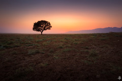 Endless Moment (Mahmood Alsawaf) Tags: mahmoodalsawaf iraq photography landscapes sunset summer sundown colors tree nature