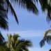 Rahme aus Palmen