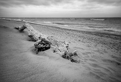 Driftwood (mswan777) Tags: lake michigan nature driftwood waves beach great lakes nikon d5100 sigma 1020mm patterns wind blowing scenic weathered black white cloud
