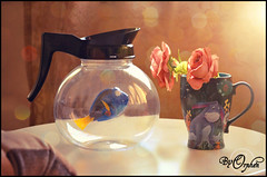 just Keep Swimming (Orphen 5) Tags: justkeepswimming findingdory findingnemo disney rose disneymug mug findingdorycoffeepot bokeh light tumblr