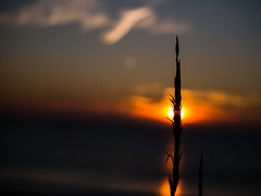 SUNSET AT OLERON (insd) Tags: oleron ile sunset sea mer coucherdesoleil soleil plage france lumix g80 explore