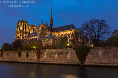 Blue Hour at Notre Dame on the Banks of the Seine River (Bridget Calip - Alluring Images) Tags: 2016 alluringimagescolorado archdioceseofparis architecture bridgetcalip church city europe exterior france gothic history night notredame ourladyofparis paris portrait rain religion sky travel allrightsreserved beautiful building cathedral chimeras copyrighted crownofthorns dame dark de famous flyingbutress french frenchgothic gargoyles heritage holynails lamp landmark light medieval notre reflection site square unesco view usa