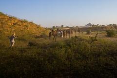 L1003301.jpg (Bharat Valia) Tags: pushkarfair bharatvalia desert rajasthanportraits bharatvaliagmailcom sheperd pushkarimages pushkarmela festivalsofindia camel pushkarcamelfair pushkar