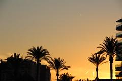 Atardecer junto a las palmeras (alexsv92) Tags: