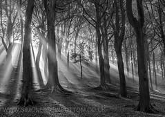 When I grow up. Calderdale, West Yorkshire (www.simonhigginbottom.co.uk) Tags: simon higginbottom uk west yorkshire halifax calderdale landscape mono blackandwhite light shafts rays trees woods woodland autumn fall nikon d800 lee filters