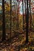 IMG_0006_2 Looking Back (oldimageshoppe) Tags: woods walk morningsun fallcolors lookingback