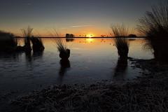 They ascend (aNNaj) Tags: zon zwanen sun rise sunrise opstijgen ascend swan dwingelderveld davidsplassen vorst frozen ijs