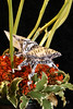 Beatles/Beetles (L_Barrez) Tags: macromondays beatlesbeetles macro origami beetle
