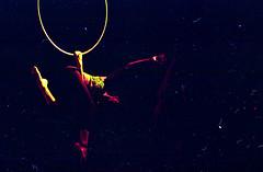 (FelipeBe) Tags: kodak proimage pro image 100 asa 100asa 35mm 35 film pelicula analogico analogic color danza dance acrobatic circus circo acrobacia performance