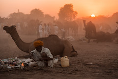 Golden Light (Vilvesh) Tags: cwc chennaiweekendclickers pushkar rajasthan pushkarfestival pushkarcamelfair pushkarmela india festival tradition cwctravelwalk travel nikon nikond750 nikon24120mm travelwalk sunset sun evening camels timelapse portrait people youngherder nikon50mm eyes herder outdoor jodhpur animal goldenhour goldenlight sky ajmer kids text