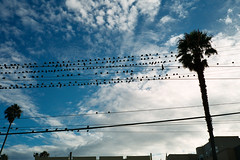 Pigeon Gathering (Taomeister) Tags: pakonf135 sanfrancisco gyoumuyou yashicat4superd 業務用100 fujifilmindustrialarchivalprint100 fujicolorindustrial100 california unitedstates us