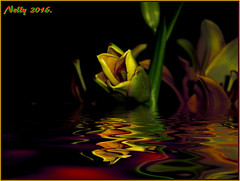 *Night... (MONKEY50) Tags: flower art lily colors digital flickraward musictomyeyes nature pentaxart autofocus pentaxflickraward ps psp hypothetical artdigital netartii awardtree exoticimage shockofthenew contactgroups exquisiteflowers macroelsalvador mixofflowers