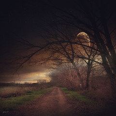 #Winter....Sleeping In The Cold (graceindirain) Tags: winter path cold moon trees texture graceindirain