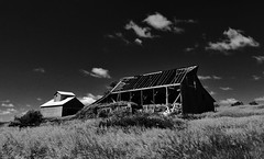 halfway gone... (BillsExplorations) Tags: halfway ruins ruraldecay barn barnsandfarms farm old forgotten decay ideal abandoned abandonedfarm abandonedillinois ruraldeterioration blackandwhite monochrome field