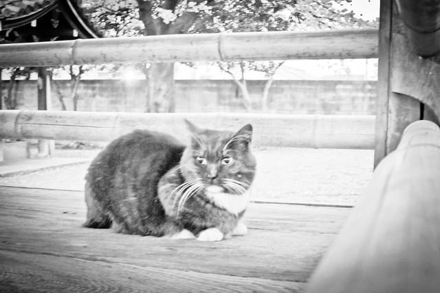 Today's Cat@2012-04-10