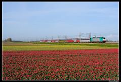 NMBS2525+9201_Nvp_14042012 (Dennis Koster) Tags: amsterdam hyacinten bloemen bollen trein tulpen narcissen bollenveld nmbs bloembollen 2825 nieuwvennep beneluxtrein br186 personentrein passagierstrein 186217 9201bruszasd