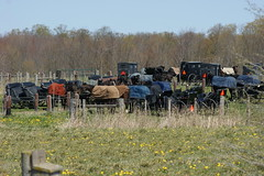 2012-04-22_Blanketed Horses (Mark Burr) Tags: meetinghouse mennonite horseandbuggy brucecounty oldordermennonite huronkinloss